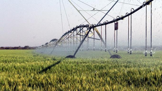 DDF funded scheme eyes 80 ha of wheat