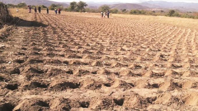 Midlands Pfumvudza farmers hit the ground after getting inputs