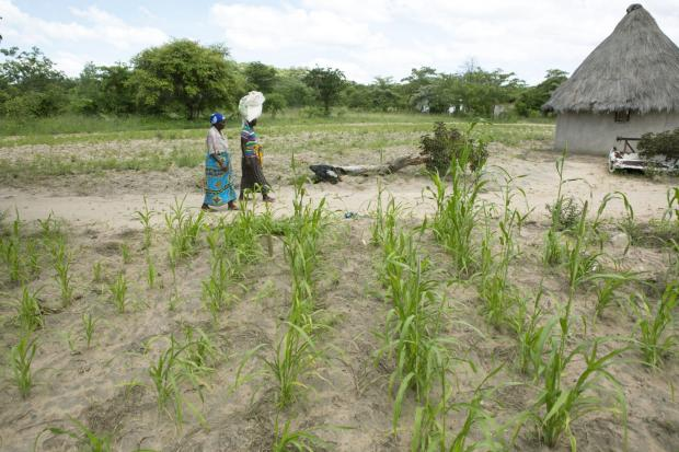 Zimbabwe is suffering the third year of drought in a row.
