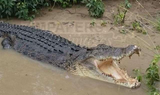 Woman falls into Limpopo . . . border jumper escapes crocodiles