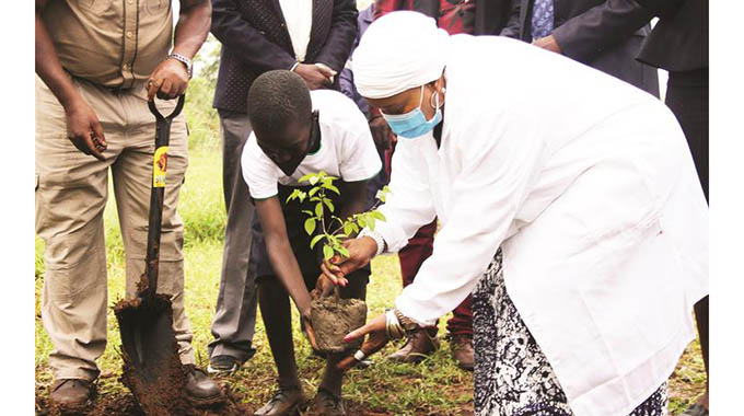 Leaders urged to take lead in tree-planting