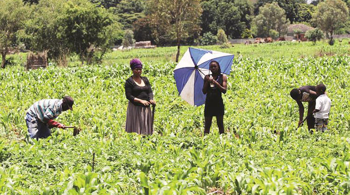 Farmers intensify planting