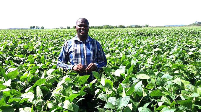 Maize hectarage rises by 137pc