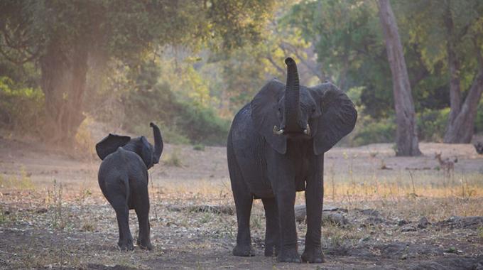 Elephants on rampage in Beitbridge