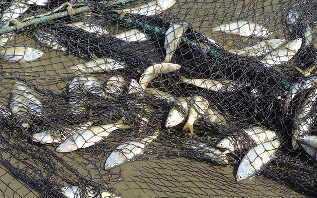 JUST IN: When nature hits back: Persistent rains leave Norton fish poachers stranded