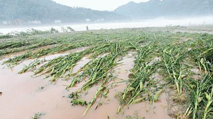 Dams burst destroy crops, sweep away livestock