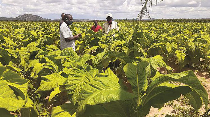 'Tobacco industry has potential to earn US$5bn'