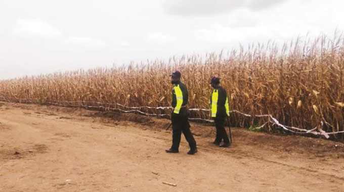 Govt moves to rescue winter maize