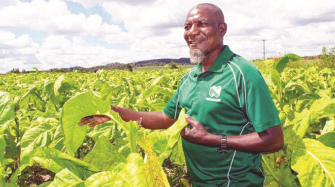 Tobacco farmers earn US$9m in 3 days