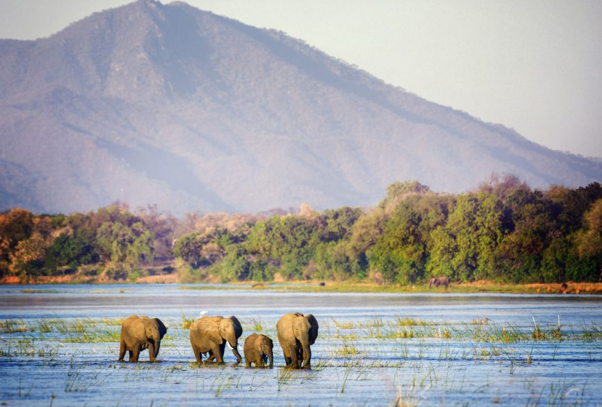 A herd of elephants wading through the water of the Zambezi River at Mana Pools National Park, Zimbabwe. Photo:Vicki Jauron, Babylon and Beyond Photography/Getty Images