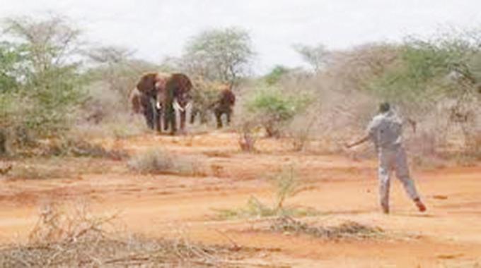 Human-wildlife conflict headache in Matobo