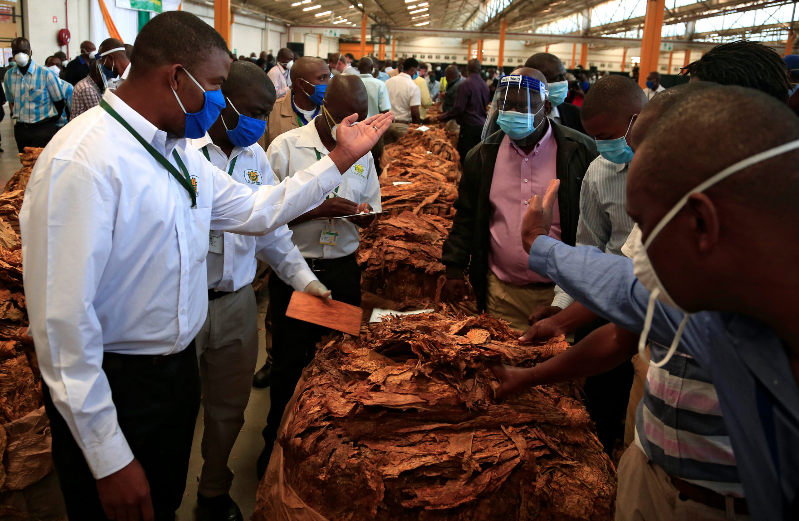Zimbabwe's tobacco farmers plead for a better deal