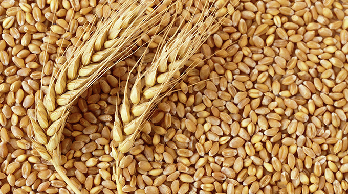 Small scale millers want access to more grain