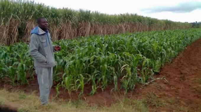 Buhera farmers toast to new dam