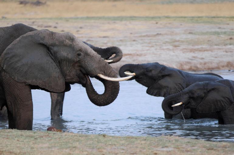 Authorities estimate more than 100,000 elephants live within Zimbabwe's boundaries [File: Philimon Bulawayo/Reuters]