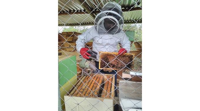 Graduate abandons pastorship for apiculture