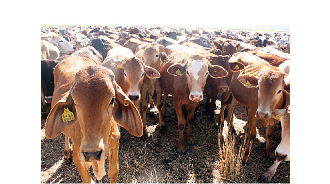 LATEST: Police arrest four cattle rustlers