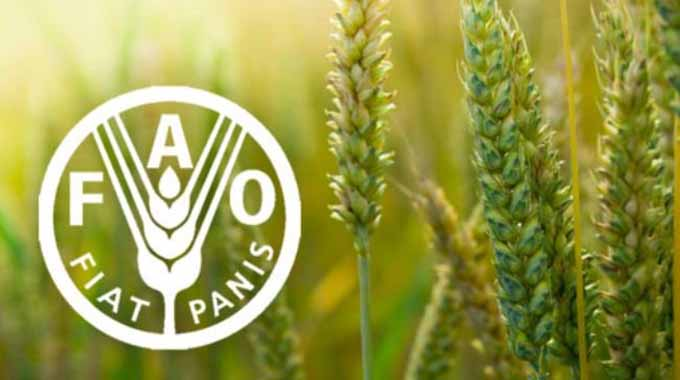 Gvt, FAO programme to strengthen extension service
