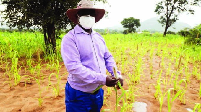 Pfumvudza changes lives of small scale farmers