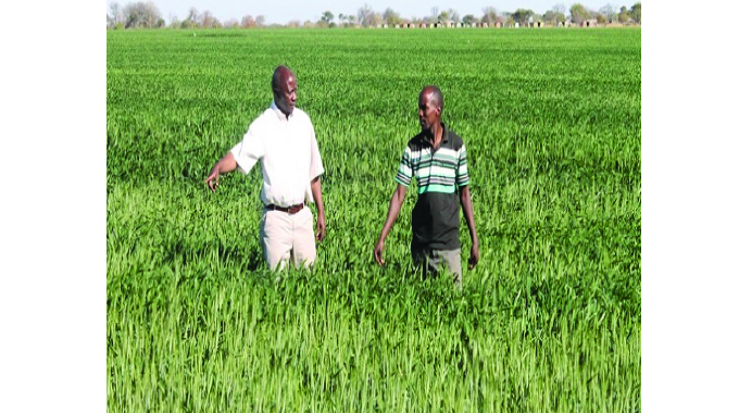 Arda expects bumper harvest from 6 000 tons winter wheat from 1668ha