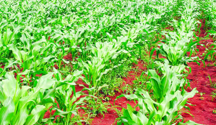 Online platforms launched to assist extension workers, farmers