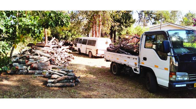 Over 50 illegal firewood dealers arrested
