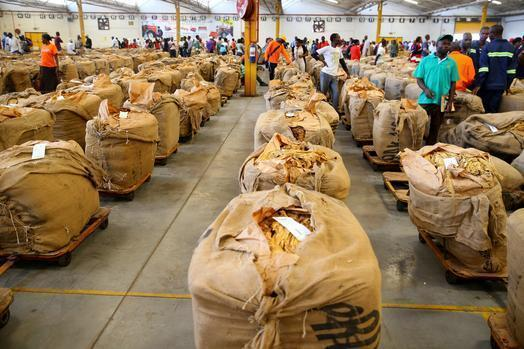 Tobacco deliveries surge past 200 million kilogrammes mark