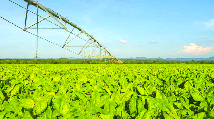 'Ample tobacco seed for 5 years'