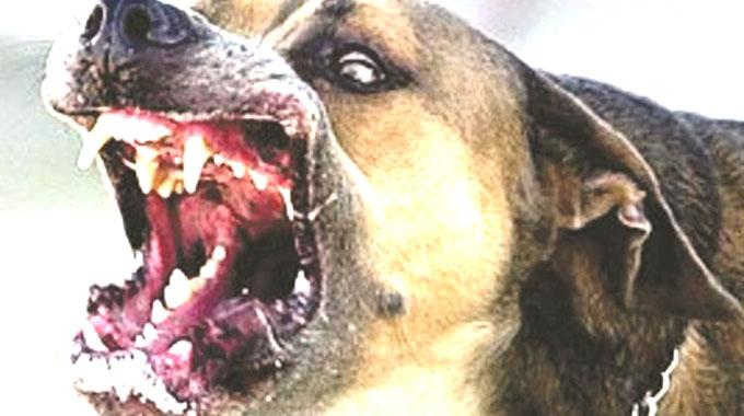 Rabies threatens livestock in Midlands
