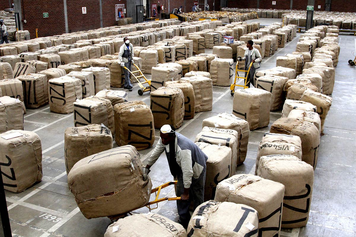 Workers arrange bags of tobacco leaves at a company warehouse