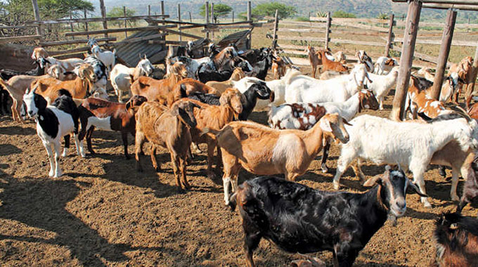 Farmers lose 46 goats