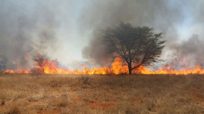 Veld fires kill four people