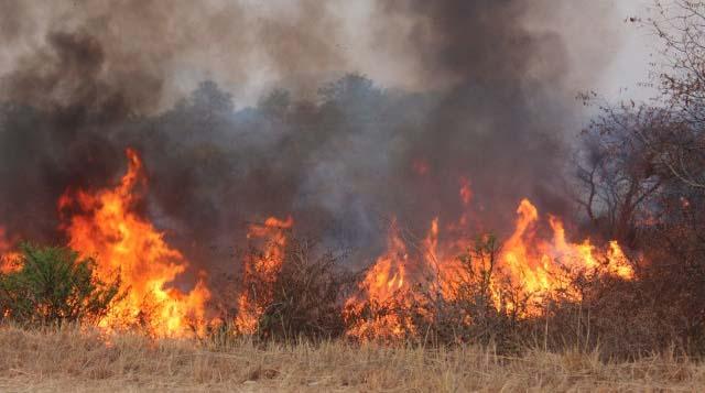 Veld fires kill five
