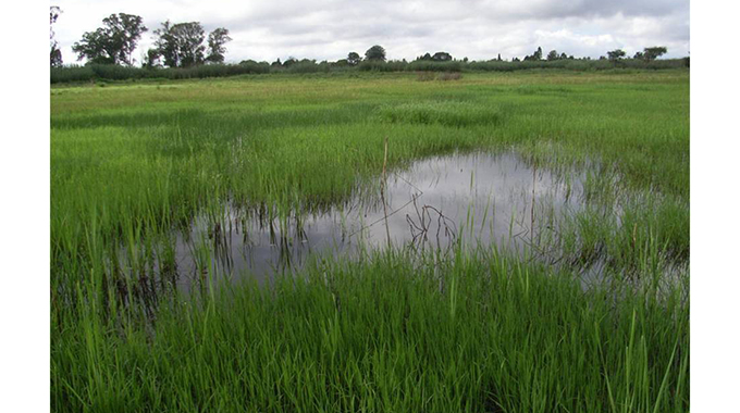 Government pledges $200 million to support wetlands