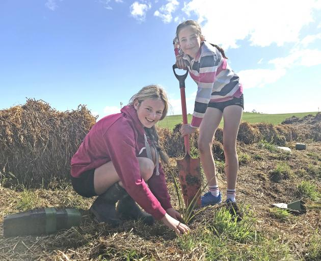 Waitaki Girls' High School pupils Summer Borrie (left) and Molly Mansfield plant flax alongside...